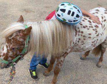 Psychomotorik auf dem Pferd